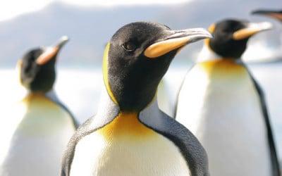 Penguin 3.0: Come prepararsi al suo arrivo